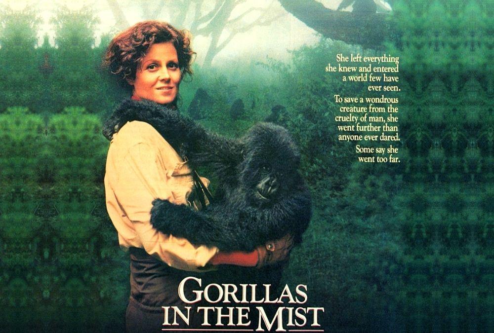 Gorillák a ködben – Dian Fossey emlékére